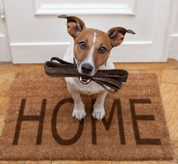 A dog learning to show owners a sign for going outside during In-Home Dog Training in Peoria IL