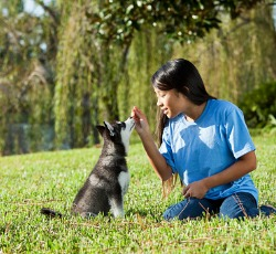 A woman holding a treat at a dog's nose during Puppy Training for Pekin IL
