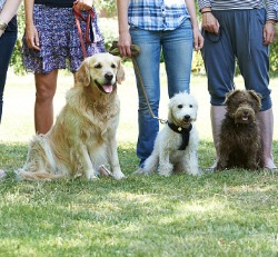 A group of dogs in a class during Dog Training Near Me