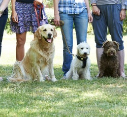 A group of dogs and their owners ready for Dog Obedience Classes in Peoria IL