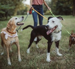 Dog Daycare Peoria IL