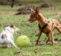 Dog growing at another dog, Aggressive Dog Training Canton IL