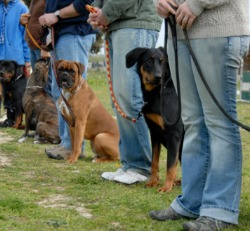 Dogs sitting next to their owners, Aggressive Dog Training Canton IL